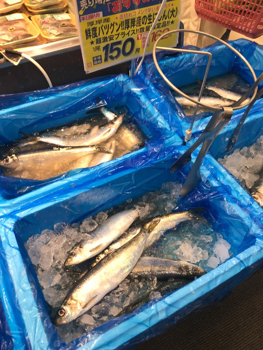 【速報】厚田はニシン漁の網が入る