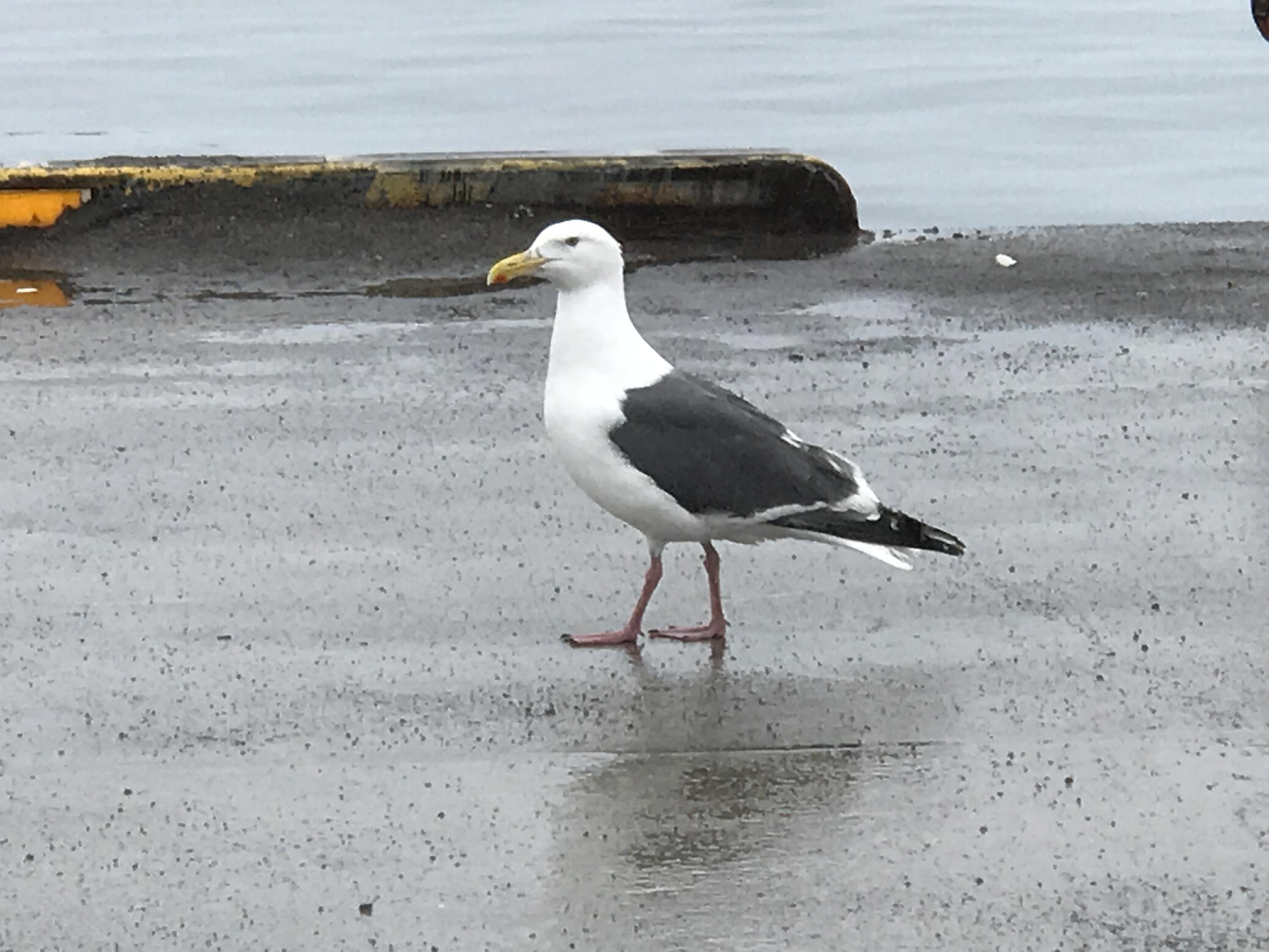 本日の朝のパトロール 苫小牧西港→白老→苫小牧東港
