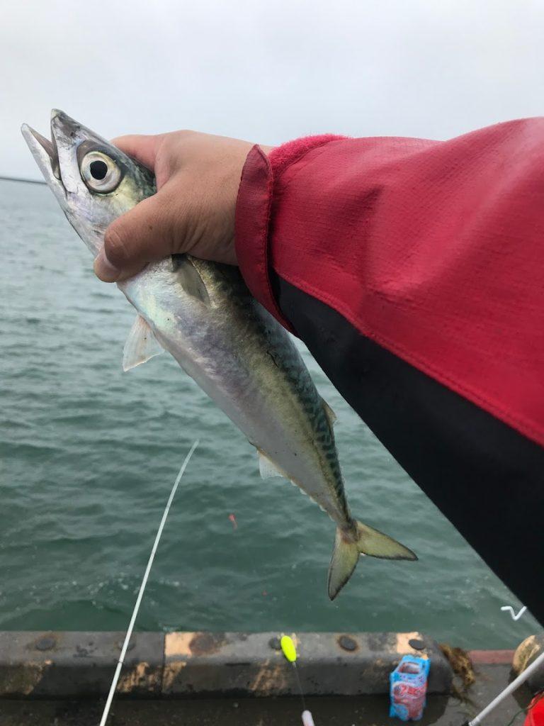 リベンジ成功、苫小牧のサバ釣り!