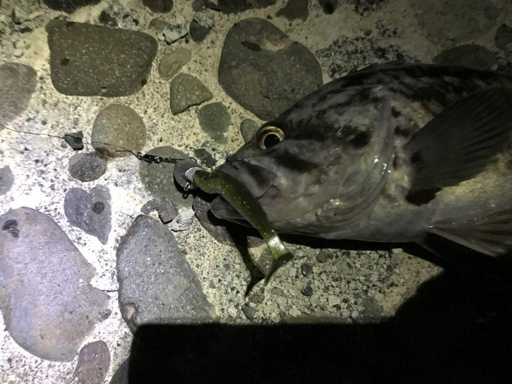 岩内 釣り ロック ソイ