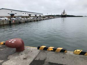 苫小牧にサバ、マイワシ釣り調査その2