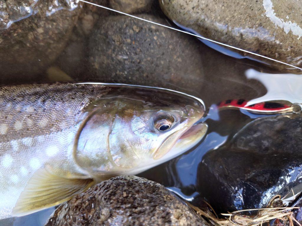 沖村川河口にサクラマスを釣りに行く