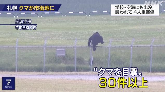有刺鉄線を乗り越えるクマ